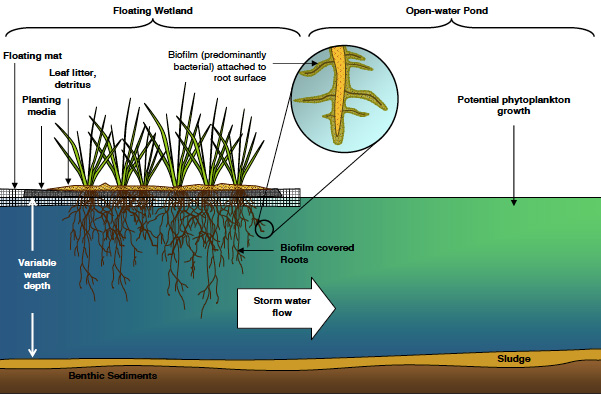Review Of Floating Wetlands For Stormwater Treatment